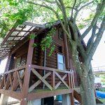 滋賀県高島市新旭町 木陰に佇む小さなログハウス