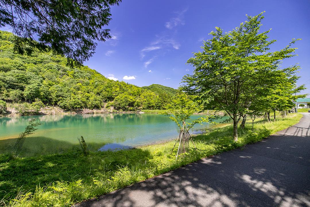池沿いに桜の木が立っています