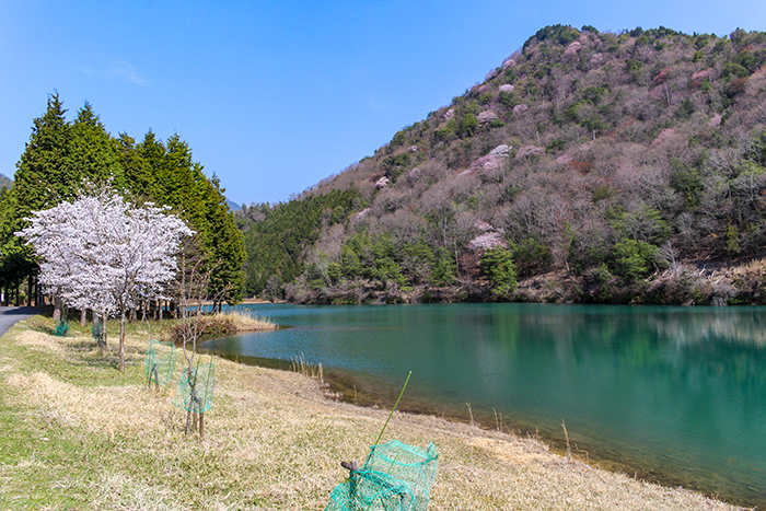 タウン内の池は山の風景とマッチしてきれいです