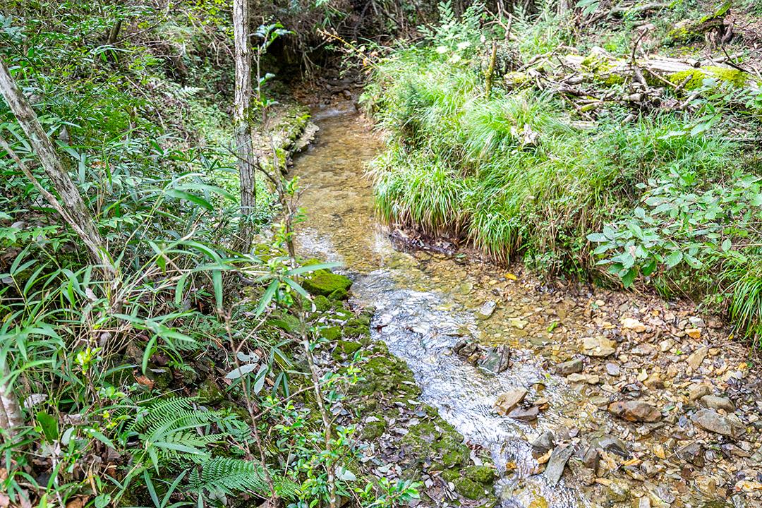 小さい川が流れています